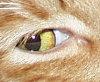jiggy eyeball