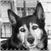faolinion userpic