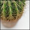 _kaktus_ userpic