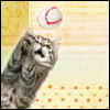 bigapplekitty userpic
