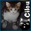 cilou userpic