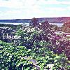 camiwa userpic