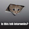 Is this teh intarweb? Cat