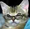 кошка и очки