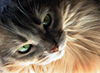 scliff userpic