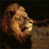 velvetchamber userpic