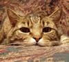 pittypatcat userpic