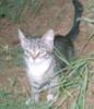 котенчишко