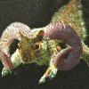 ramdragon userpic