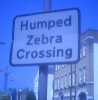 humped zebra