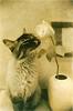maymak ayu: кошко с цветочком