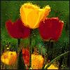 Триша, кошка Франка: flowers
