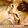 [kitty] *eats hand*