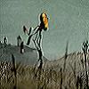 hodmadod userpic