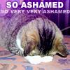 Kitten so ashamed
