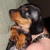 Valerie: Holli pup
