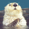 otter_girl userpic