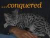 cats - tori sleeping