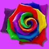 Ace Lightning: rainbow rose