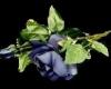kamijos_roses