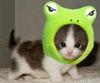 FroggerKitten