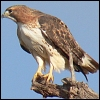 thestudyofbirds userpic