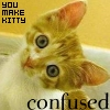 Kristal: confused kitty