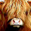 qwiggles userpic