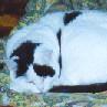bobbycat