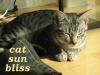 cats - tori sun