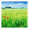 siropki userpic