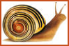 snailrevolution userpic