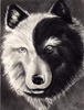 phantomstarwolf userpic