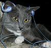 cat headphones 2