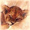 Sleeping monster :)