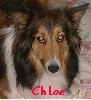 chloesheltie userpic