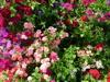 Kristine Smith: flowers