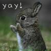 bunny yay!