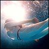 silence_world userpic