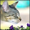 catiadoodle userpic