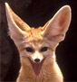 demented_fennec userpic