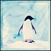 stock - penguin love