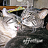 Aquila Tal: cats - affection