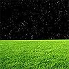 grass and stars