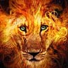 kuddle_lion userpic