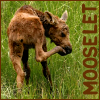 mooselet userpic