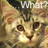 Hoshikage: kitty