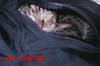 Laura Anne Gilman: hiding