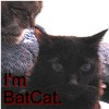 batcat_a2 userpic