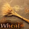 Food: wheat